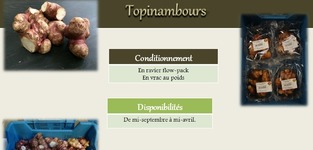 Agrisert - Gerpinnes - Topinambours